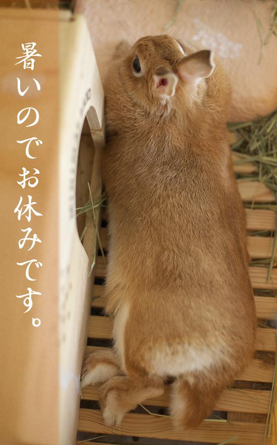2008_Summer_TANTO.jpg