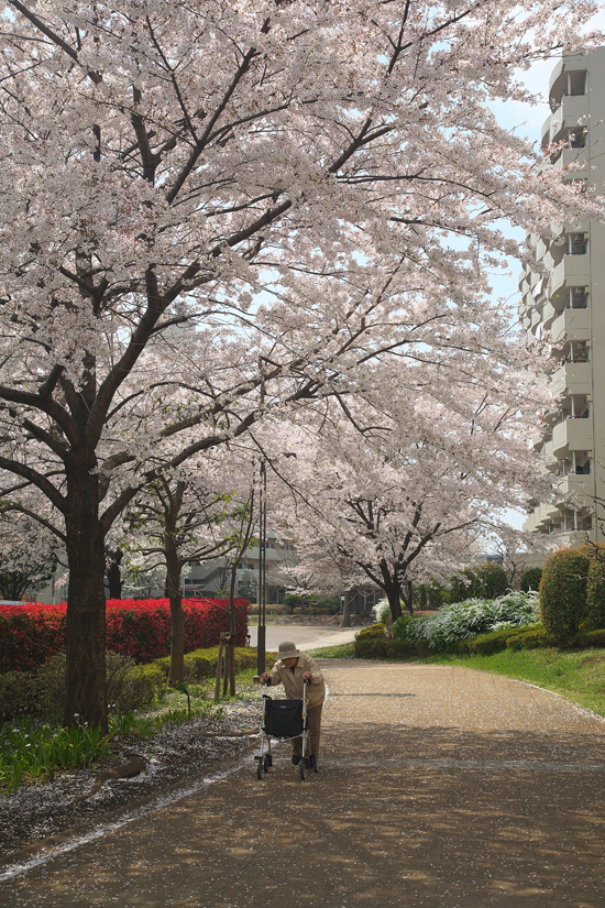 2008sakura_0832.jpg