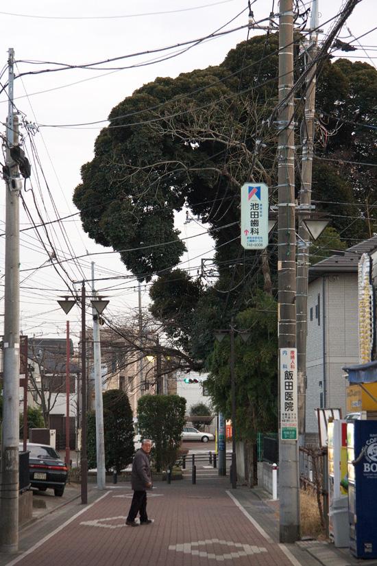 Godzilla_8983WEB.jpg