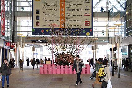 kariyazaki03.jpg