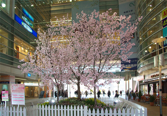 ohno2008eki_sakura02.jpg