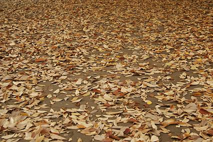 park_a01.jpg
