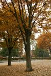 park_a09.jpg