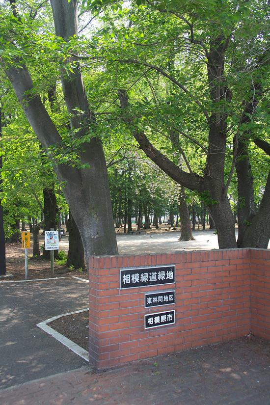 sagamir_yokudou_9373.jpg