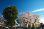 sakura_web0023.jpg