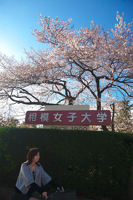 sakura_web0026.jpg