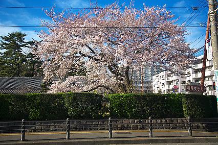 sakura_web0028.jpg