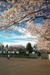 sakura_web0041.jpg