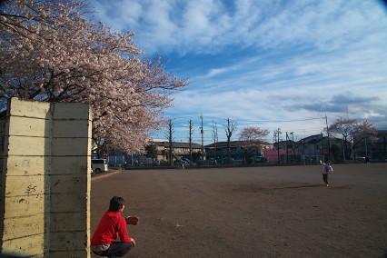 sakura_web0044.jpg
