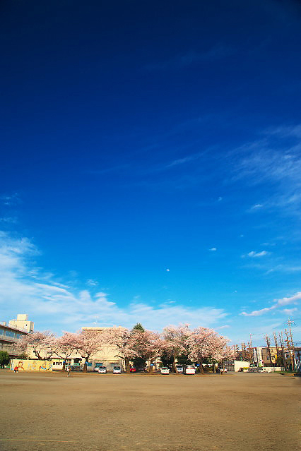 sakura_web0046.jpg