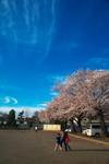 sakura_web0050.jpg