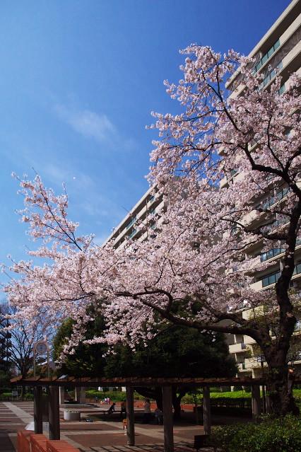 sakura_web0073.jpg