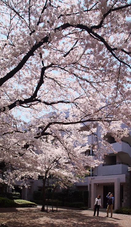 sakura_web0075.jpg