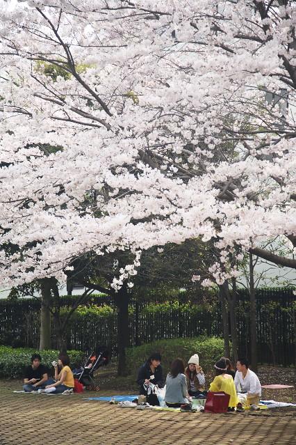 sakura_web0109.jpg