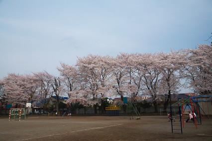 sakura_web0118.jpg
