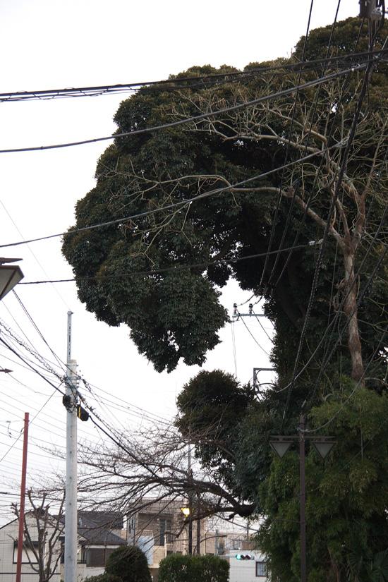 Godzilla_8985_WEB.jpg