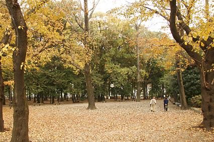 park_b01.jpg